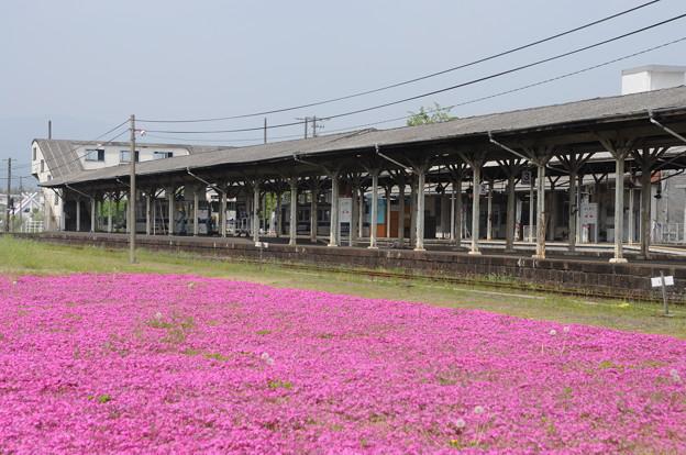 駅ホームと芝桜