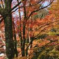 Photos: 長安寺の紅葉