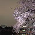 Photos: 夜桜12