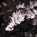 Photos: 夜桜13