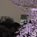 Photos: 夜桜17