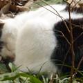 写真: 眠り猫