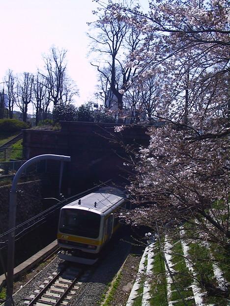 写真: 四ツ谷の桜の下を…