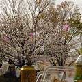 Photos: 私も…(^_^;)