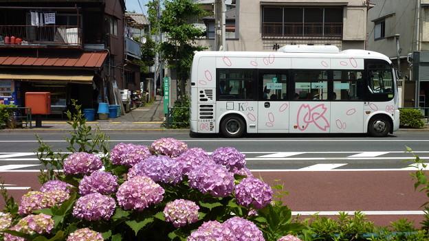 紫陽花とKバス
