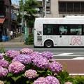写真: 紫陽花とKバス