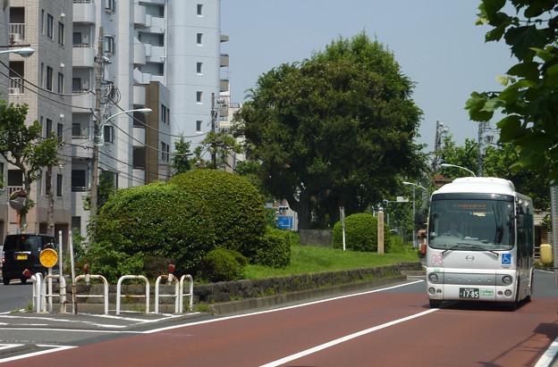 西ヶ原一里塚(1)