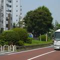 Photos: 西ヶ原一里塚(1)