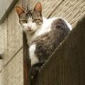 塀の上の猫