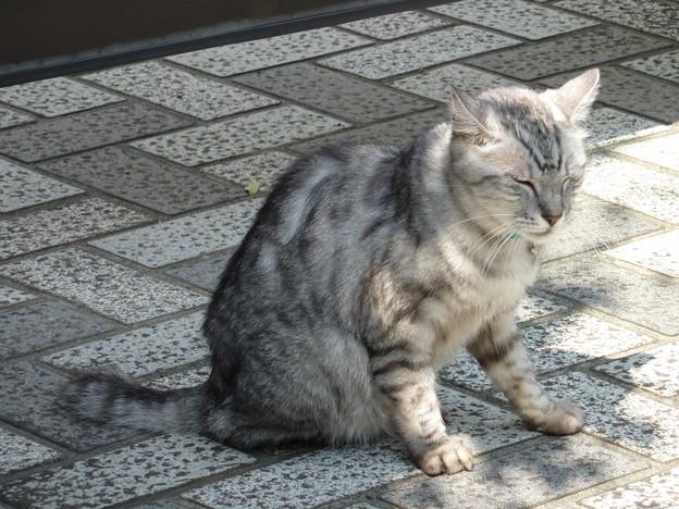 Photos: 門前の猫