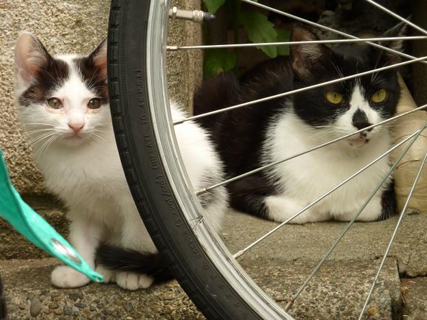 写真: 野良猫の親子(1)