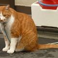 まねき猫!?(2)