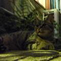 Photos: 吾輩は猫である!