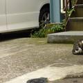 朝食を頬張る野良猫(2)