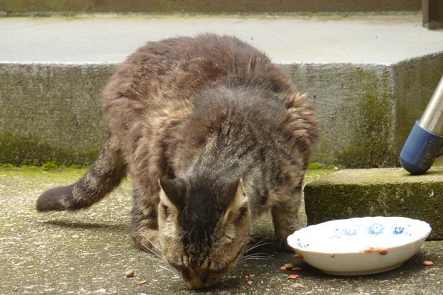 朝食を頬張る野良猫?