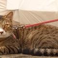 近所の飼い猫(2)