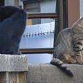 Photos: 反省する野良猫!?