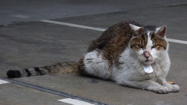Photos: 麻布十番の眠り猫??
