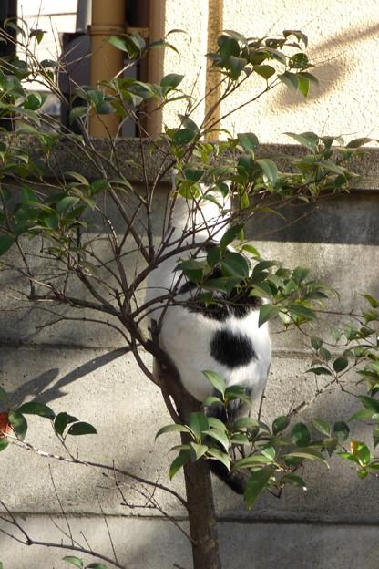 枝登りシーン