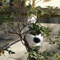 写真: 枝登りシーン
