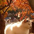 初冬の公園猫?