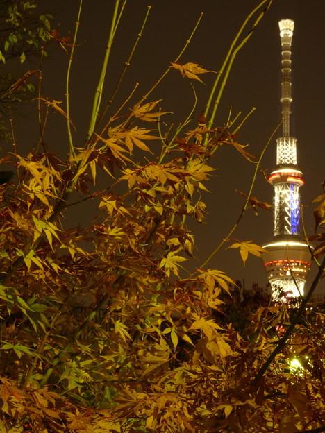 Photos: 夜の楓とスカイツリー(2)