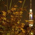 写真: 夜の楓とスカイツリー(2)