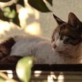 写真: 屋根の上の野良猫?