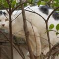 Photos: 木に登った所で…