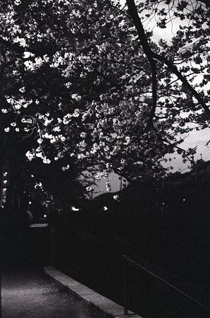 201303-10-013PZ