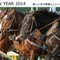 Photos: 2014年年賀