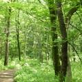八国山の散歩道