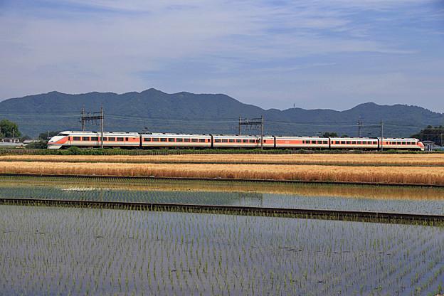 太平山サニーコーラル麦水田