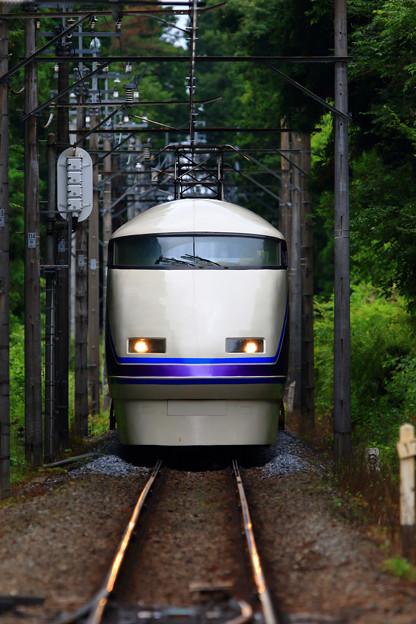 Photos: 新緑のトンネル