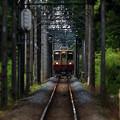 新緑のトンネルへ