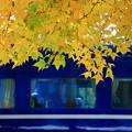 Photos: ホームの黄葉