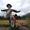 岐阜旅行2013(飛騨高山・ステラフェリス・白川郷)