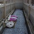 写真: 歩道橋の寝床