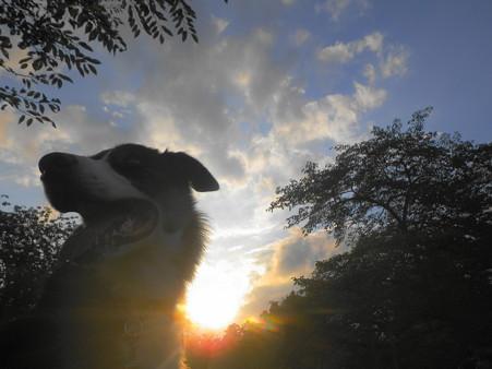 Rexと夕方散歩