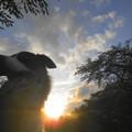 写真: Rexと夕方散歩