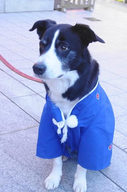 写真: Rex203元朝参り