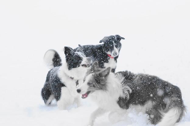 写真: 2013雪遊び