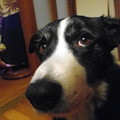 写真: Rex6歳1