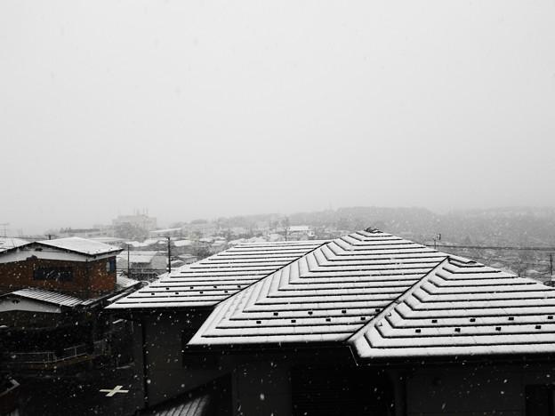 写真: 4月の雪 2013