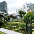 Photos: 中之島公園・E