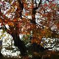光明院の紅葉