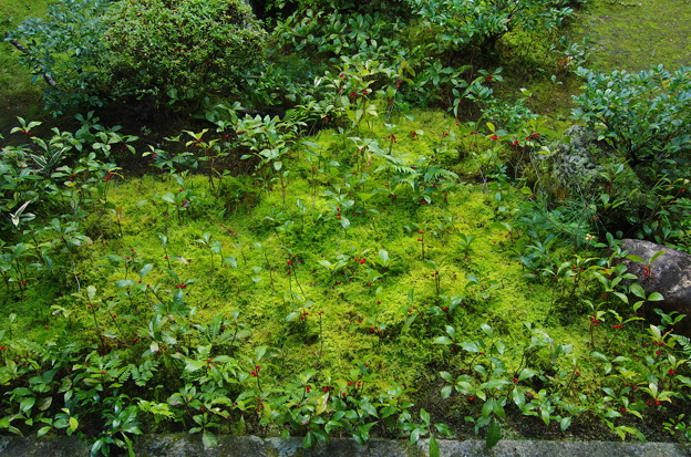 高桐院庭園