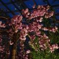 Photos: Blossom Bliss @ Flower Dome