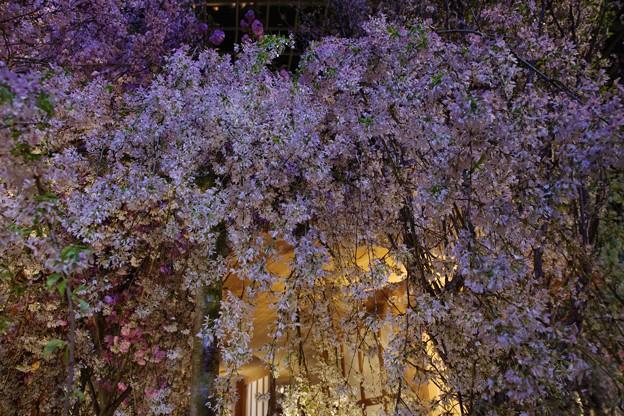 Blossom Bliss @ Flower Dome