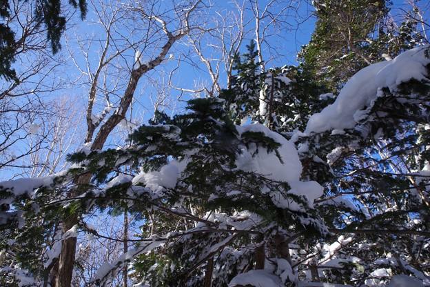 知床五湖の森